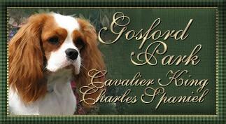 ::Gosford Park:: Cavalier King Charles Spaniel